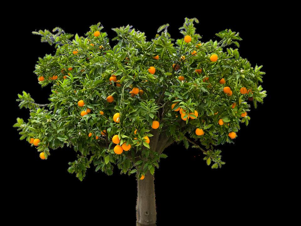 Planter un arbres dans son jardin